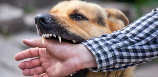 Dog bite lawyer jacksonville NC